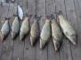 Рыбалка в июне